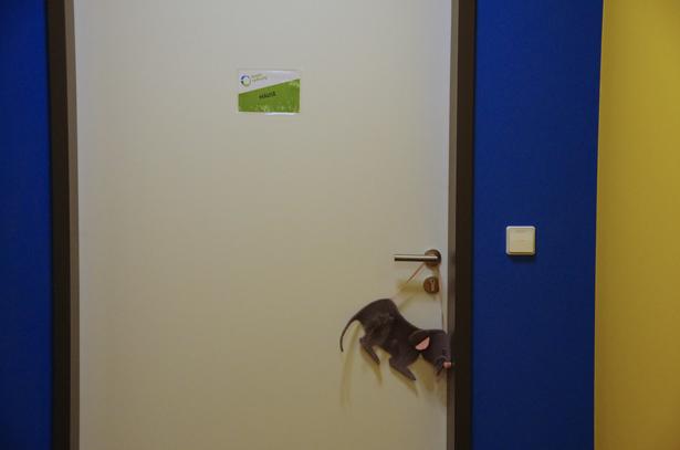 Tür mit der Aufschrift Mäuse